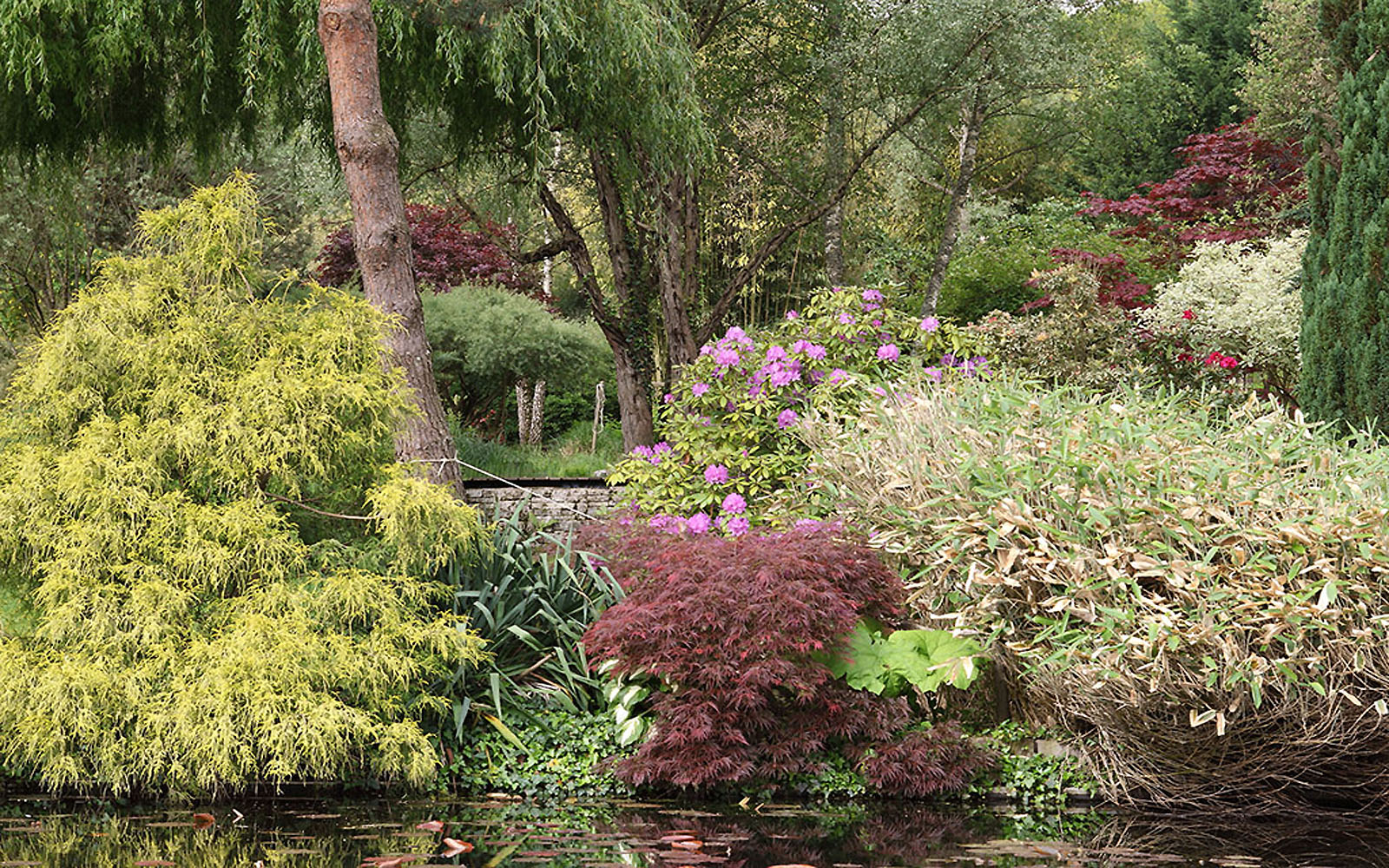 Jardins-Acorus1©jardins-acorus