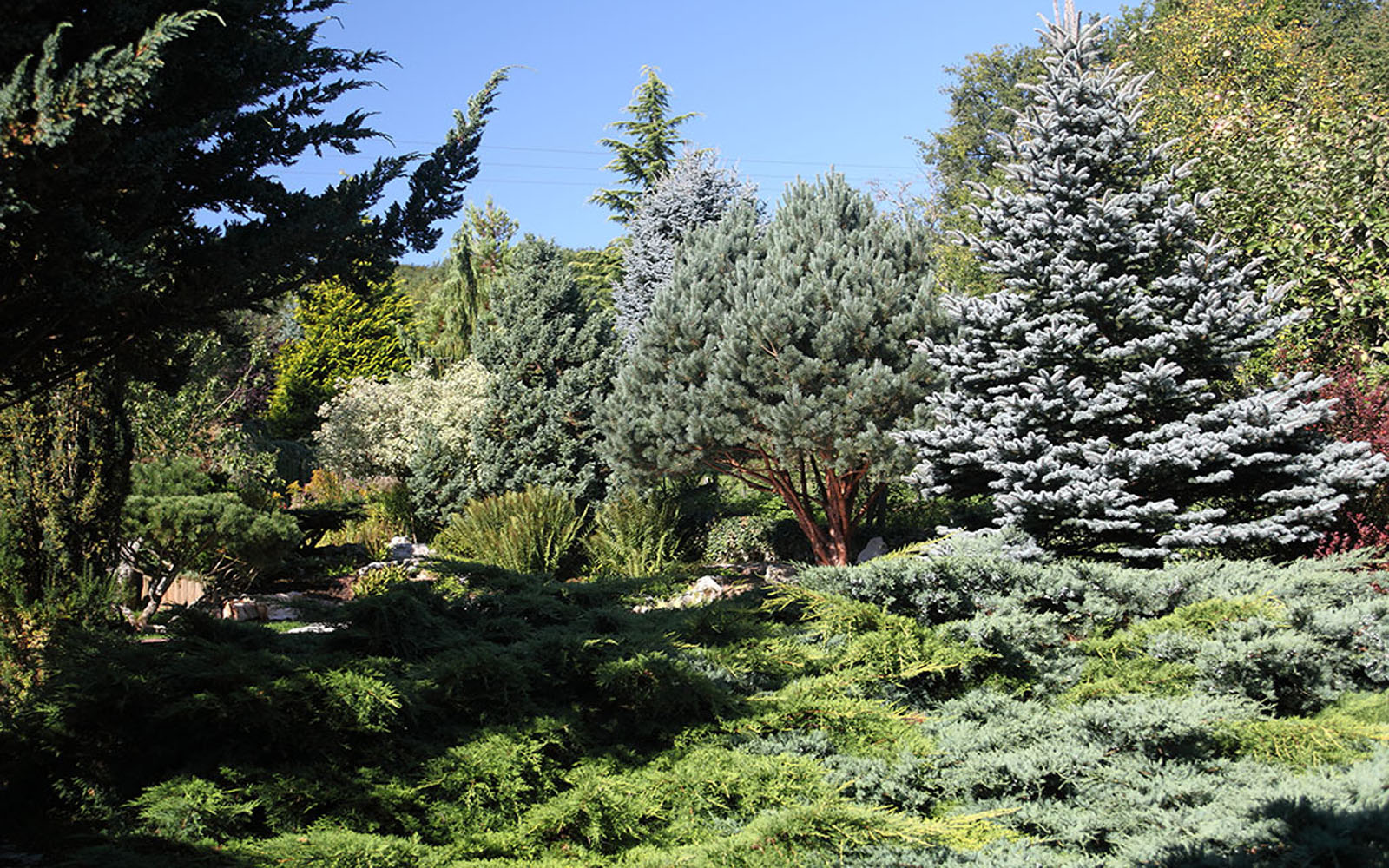 Jardins-Acorus4©jardins-acorus
